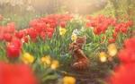 Обои Рыжая кошка среди рядов тюльпанов. Фотограф Инна Сухова