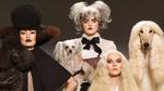 Обои Три гламурных дамы с собачками