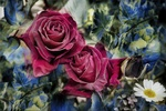 Обои Коллаж с ромашками, розами и листочками
