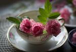 Обои Розовые розочки в чашке на блюдце на салфетке. Фотограф Julie Jablonski