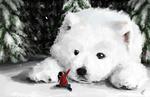 Обои Девочка сидит на снегу перед огромным белым псом, by soupsane
