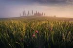 Обои Трава и цветы в утренней росе, Тоскана, Италия, Фотограф Dmitry Kupratsevich