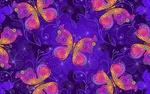 Обои Разноцветные бабочки на лиловом фоне