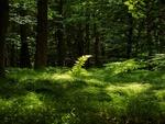 Обои Зеленеющий лес летом