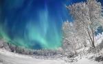 Обои Северное сияние над зимней природой
