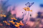 Обои Бабочка сидит на цветке, фотограф Eleonora Di Primo