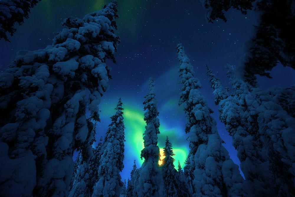 Обои для рабочего стола Ночное зимнее небо над елями, фотограф Adnan Bubalo
