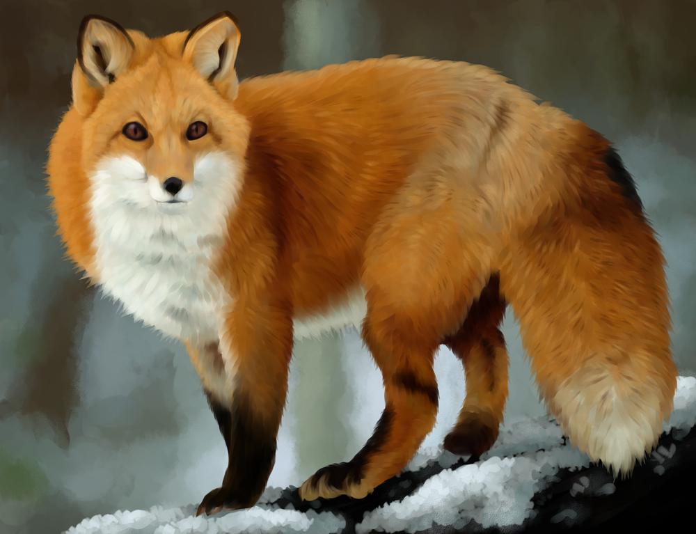 картинки с изображением лисицы того, марте актриса