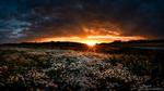 Обои Поле ромашек на закате, фотограф Juuso Oikarinen