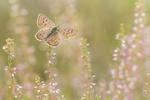 Обои Бабочка на цветении тоненьких полевых цветов