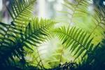 Обои Большие листья папоротника
