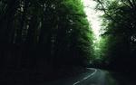 Обои Дорога в густом зеленом лесу