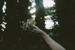 Обои Букетик ромашек в руке на фоне природы