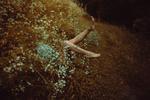 Обои Из цветов незабудок видны ножки девушки, фотограф Stefano Bosso