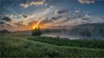 Обои Поле с одуванчиками у реки туманным утром, фотограф Valentin I S