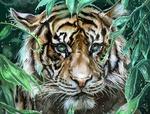 Обои Тигр за листвой, by Alex Maybloom