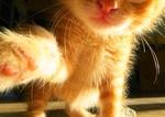 Обои Рыжий котенок, by TheBlackRaven666