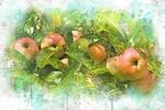 Обои Созревшие яблоки на ветке, стилизация под рисунок, by Elena / Azazelok