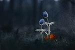 Обои Сон - трава под дождем / Лесная семейка, фотограф Александр Чорный