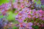 Обои Сиреневые цветочки в каплях росы на размытом фоне