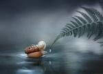 Обои Улитка на желуде в ручье у ветки папоротника, фотограф Александр Чорный