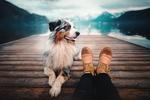 Обои Собака лежит у ног хозяйки на пирсе, на фоне горного озера