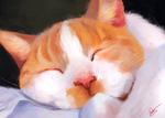 Обои Спящий бело-рыжий кот, by Vaynese