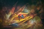 Обои Божья коровка на цветке под дождем, by GJ-Vernon