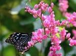 Обои Бабочка на веточке розовых цветов
