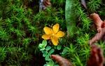 Обои Желтый цветок среди зелени и осенних листьев