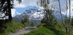 Обои Дорога среди деревьев и цветов, Альпы на заднем плане, лето, by Silvia & Frank