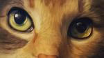 Обои Мордочка рыжего кота крупным планом, by ChellytheBean