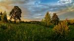 Обои Теплый летний вечер на зеленом пригорке с редкими деревцами, фотограф Valentin I S