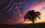 Обои Одинокое дерево на фоне заката, фотограф Ольга Кулакова