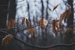 Обои Осенние листики на ветках