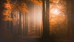 Обои Дорога в осеннем лесу, фотограф Christian Wig