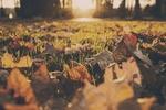 Обои Опавшие осенние листочки в лучах солнца