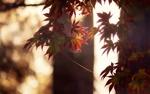 Обои Осенние листья на фоне боке
