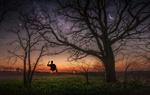 Обои Парень на качели, подвешенной к дереву. Фотограф Christian Heller