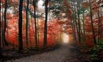 Обои Дорога в парке поздней осенью