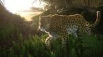 Обои Леопард на природе в джунглях, by JohnWulffe