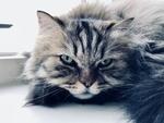 Обои Кошка на подоконнике окна