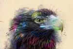 Обои Ястреб в брызгах краски, by 0l-Fox-l0