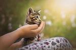 Обои В руках девушки голубоглазый котенок, фотограф Tarik HZ