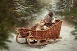 Обои Ребенок и щенок хаски в плетенных санках среди зимнего леса, фотограф Дарья Громова