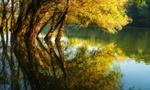 Обои Осенние деревья в воде, фотограф Andy58 / Andrаs Schafer