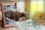 Обои Медведь, высунувшийся из рамки стоящей на столе фотографии, ловит выпрыгнувшую из воды рыбу, фантасмагория, боке, by Jan Rye Kristensen