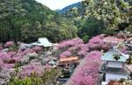Обои Пейзаж японского города Оита / Oita, утопающего в цветущих деревьях, by Kohji Asakawa