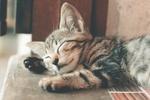 Обои Спящий маленький котенок, by Ihsan Aditya