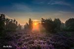 Обои Закат солнца над полем вереска, by Ma Be Ha